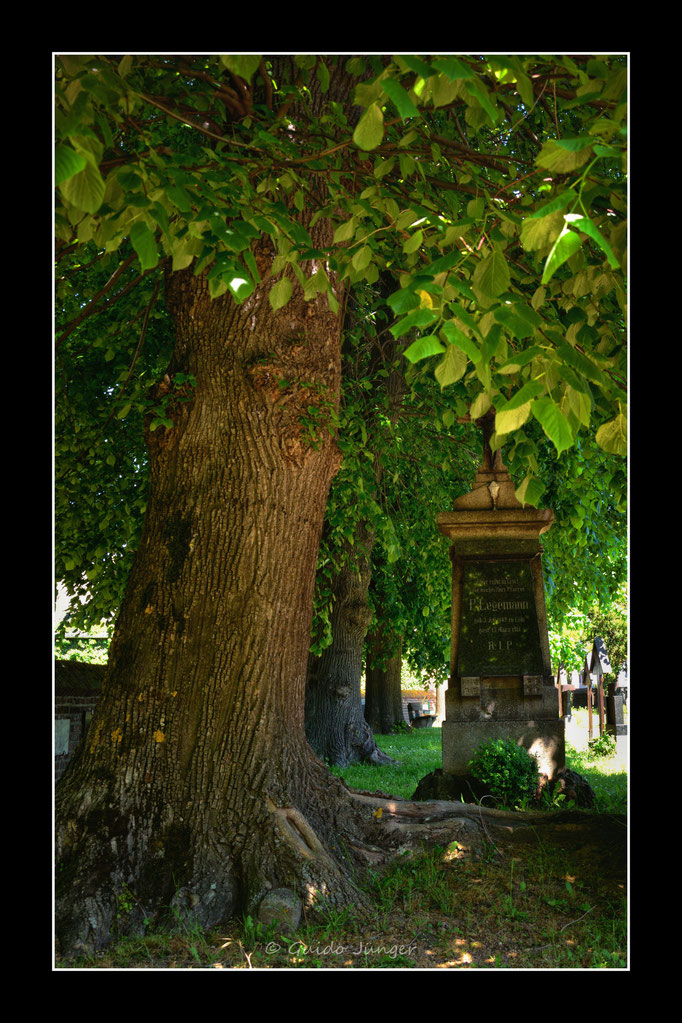 #35 Friedhof