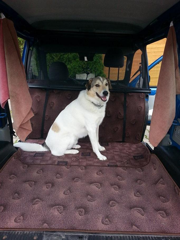 Okayyyy...Hier hinten ist es auh super! ;-) Ein Auto extra für uns Doggy's umgebaut =) (Ronnie) 05.07.14