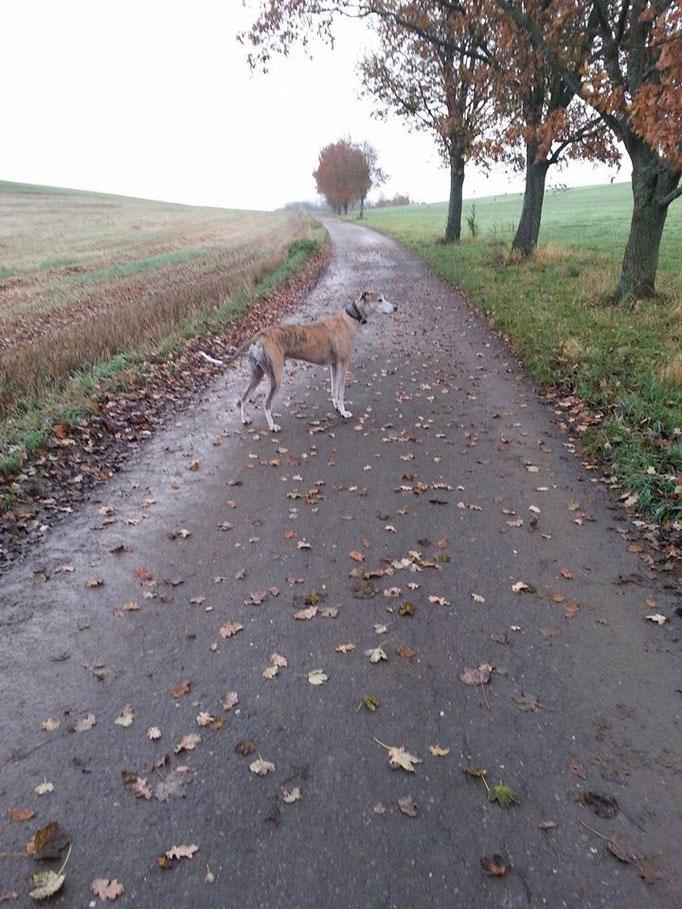 Ein Leben ohne Hund ist ein Irrtum (Carl Zuckmayer) (Bild:Siggi) 11.11.14