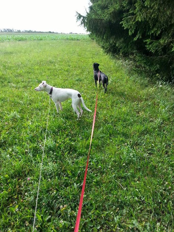 Der Hund braucht sein Hundeleben.Er will zwar keine Flöhe haben, aber die Möglichkeit sie zu bekommen. (Robert Lembke) (Bild: li.Talitha und re.Lucky) 05.07.14