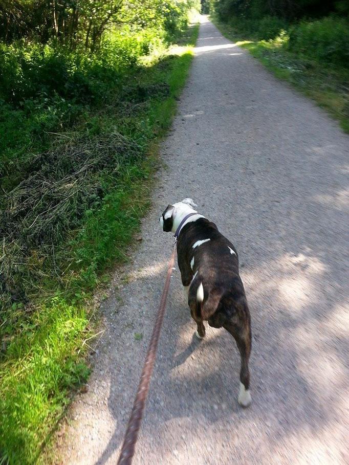 Hunde! Wenn es sie nicht gäbe, man müsste sie erfinden. (Martin Pietralla) (Bild:Pia) 26.06.14