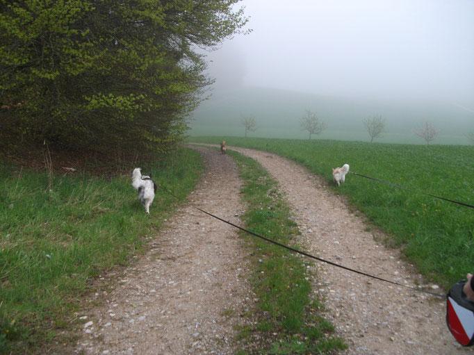 Im Wald und auf der Heide (Bertha, Amely & Milky) 03.05.14