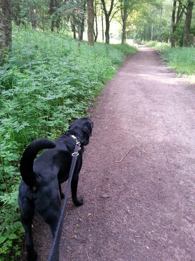"""""""Mit einem Menschen an der Leine macht der Spaziergang noch mehr Spaß."""" (Jane Swan) (Barco) 04.06.14"""