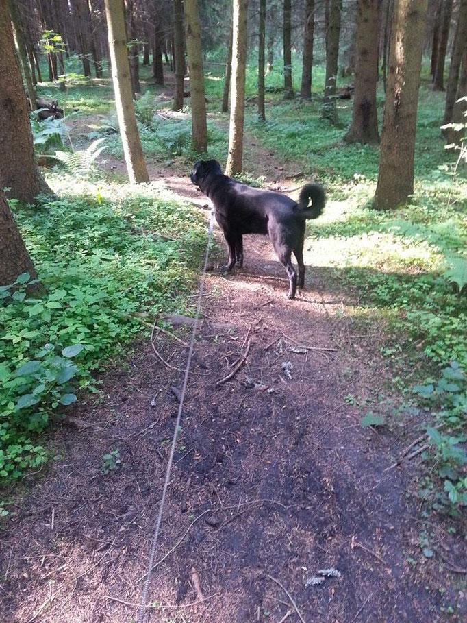 Nicht ab durch die Hecke...aber ab durch den Wald xD (Santos) 21.06.14