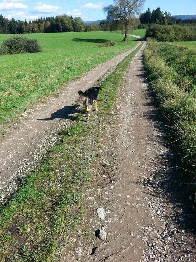 Unverständlich, dass einem Hund ein Mensch lieber ist als ein Hund (Richard Katz) (Bild:Kira)14.10.14