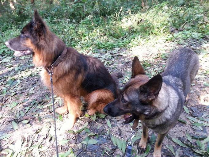 Links: Jacko und Rechts: Baby 16.09.14