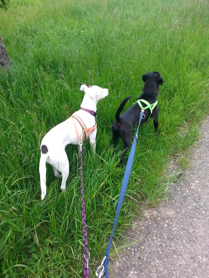 """""""Wenn sich im Paradies eine Menschenseele und eine Hundeseele begegnen, muss sich die Menschenseele vor der Hundeseele verneigen."""" (Sibirisches Sprichwort) (Bild: Talitha & Lucky) 28.05.14"""