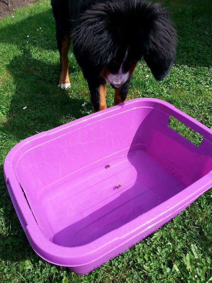 Wasserspiel bei dem warmen Wetter (Feli) 09.09.14