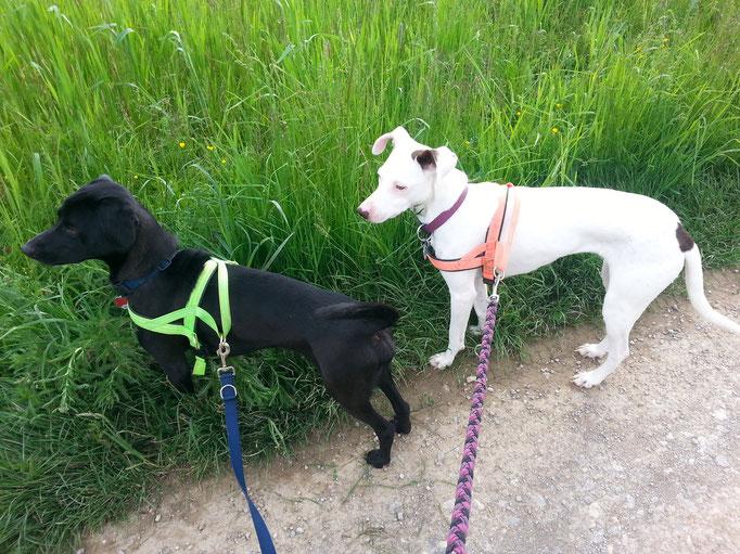 V.l. Lucky & Talitha 28.05.14