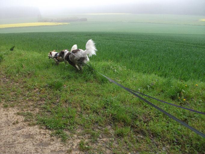 Auf geht's - Ab geht's =) (Bertha und Milky) 03.05.14