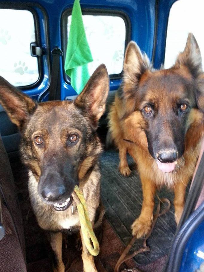 Dreamteam Baby (links) und Jacko (rechts) im Doggy-Mobil :-D 28.10.14
