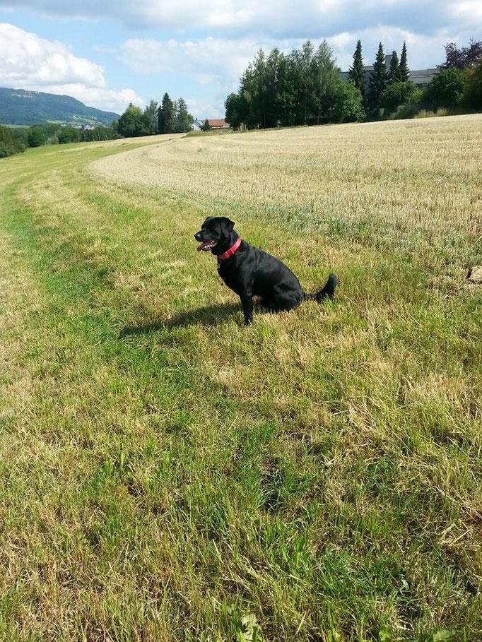 Super schönen Spaziergang gehabt =) (Barco) 24.06.14