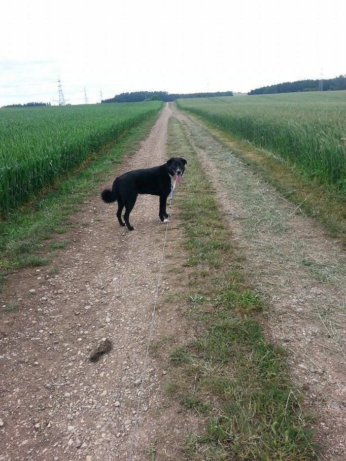 Der Hund bleibt Dir im Sturme treu, der Mensch nicht mal im Winde. (Franz von Assisi) (Bild:Santos ) 11.06.14