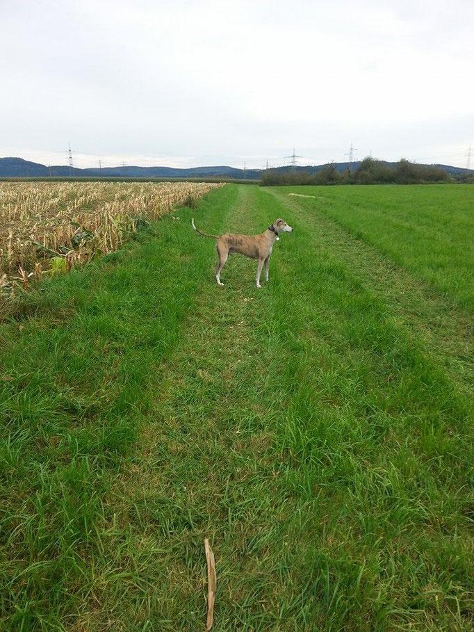 Siggi genießt den Freilauf :-) (10.10.14)
