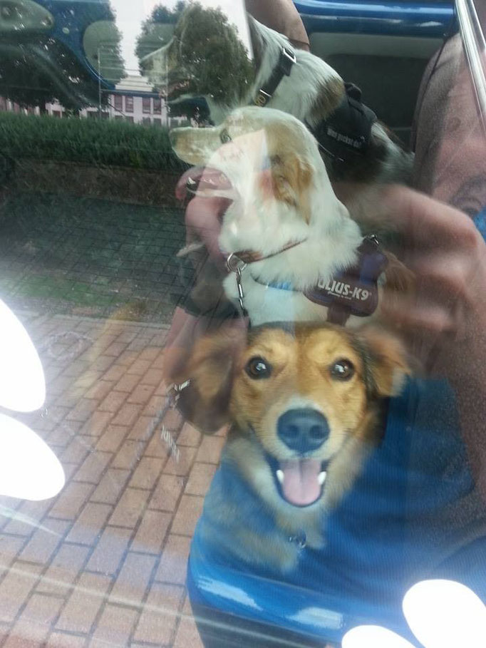 Tierarztbegleitung mit Bertha (hinten), Milky (mitte) und Amely (vorne) 25.07.14