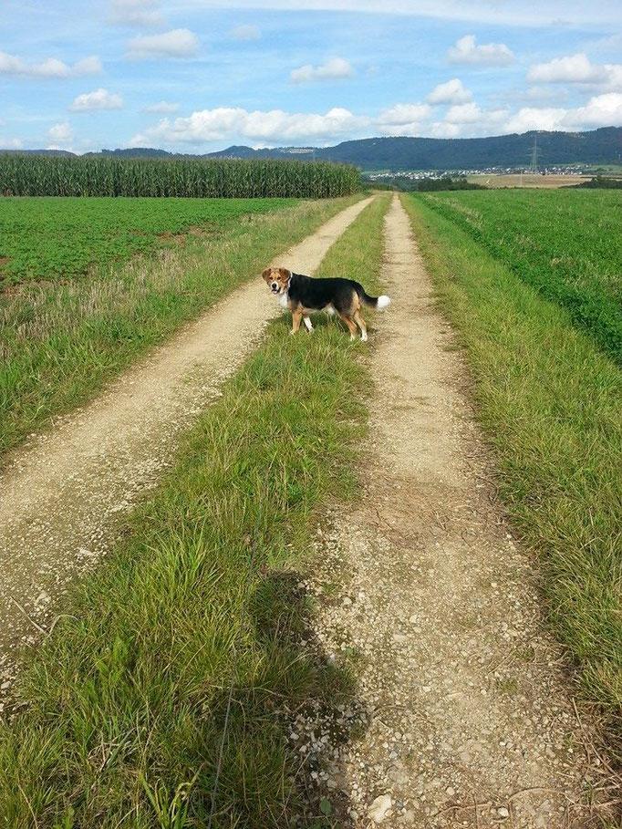 Der Umgang mit einem Hund tut dem Menschen wohl. (Tibetisches Sprichwort) (Bild: Linus 28.08.16)
