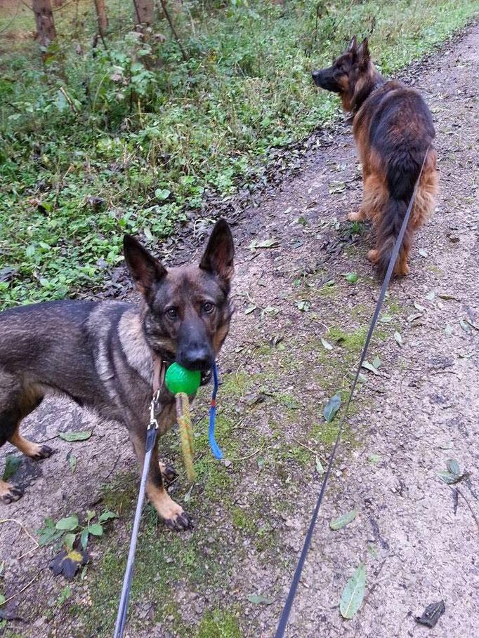 Der Hund ist ein Begleiter, der uns daran erinnert, jeden Augenblick zu genießen (Marla Lennard) (Bild: Baby links und Jacko rechts) 01.10.2014