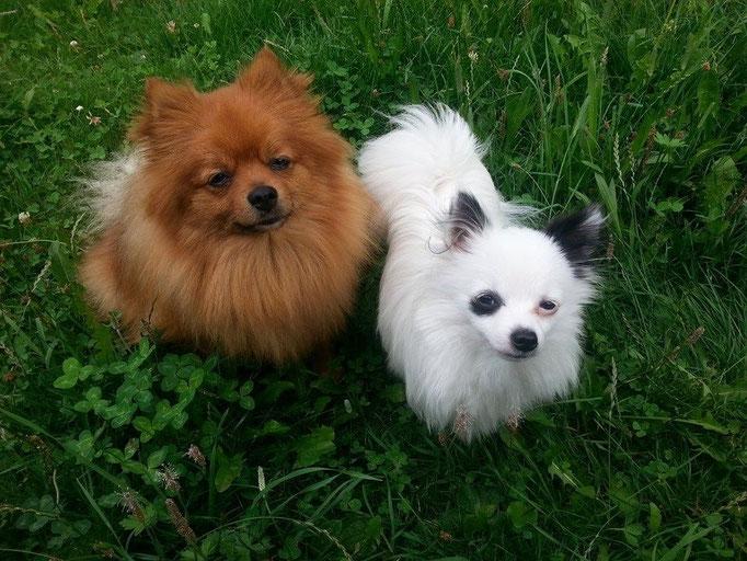 Cooper (links) und Camwa (rechts) 28.07.14