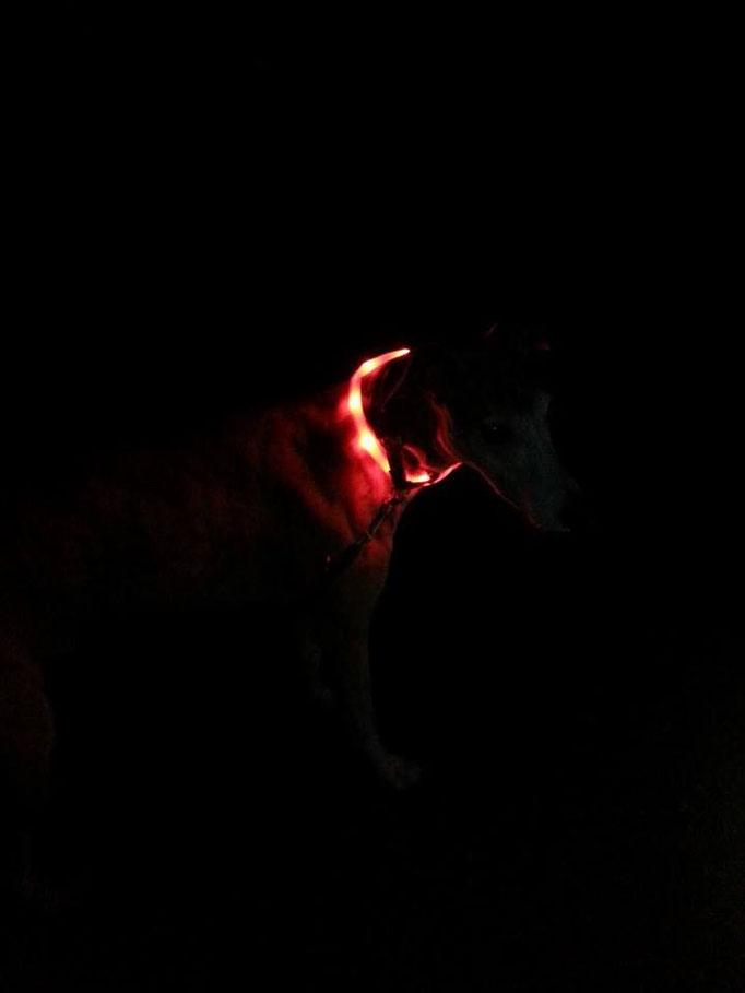 Siggi-Das Glühwürmchen 10.11.14