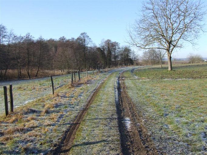 Chemin vers l'étang (2010)