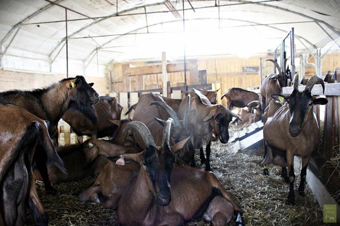 Notre grange pour les chèvres.