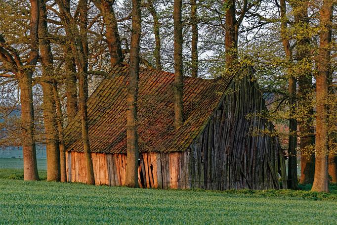 Baumhaus - Foto: Guido Terbrüggen