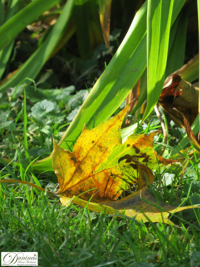 Gelbes Ahornblatt in Garten