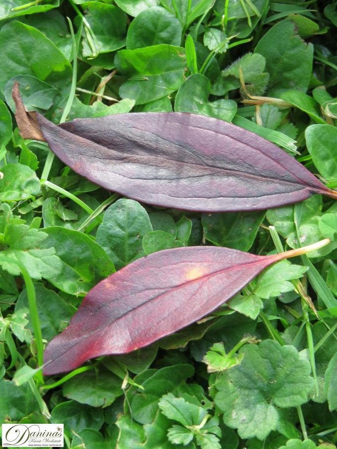 Rot gefärbte Blätter