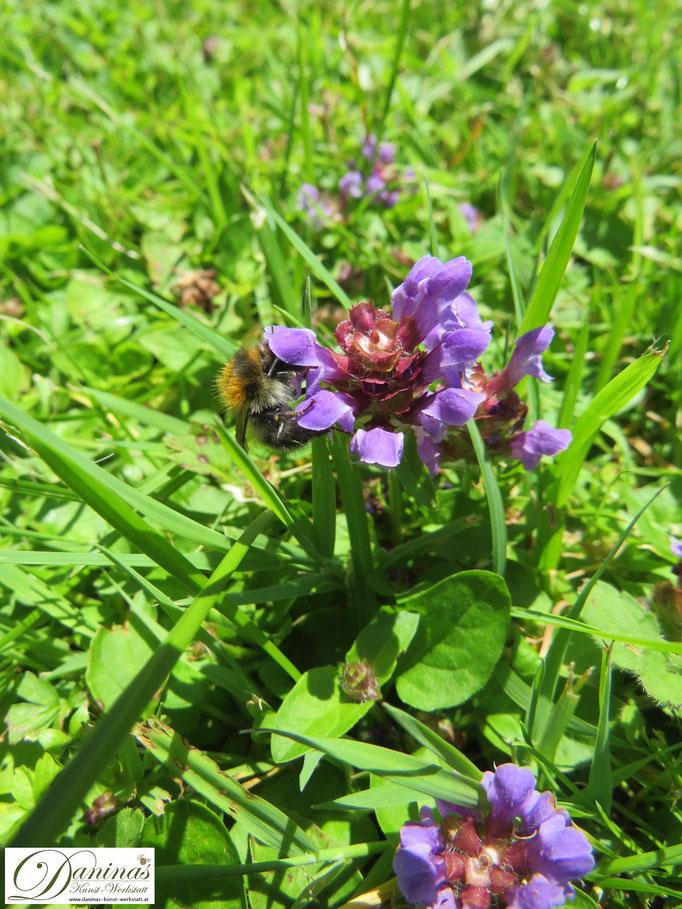 Im naturnahen Garten wachsen Wiesenkräuter, die Bienen und Insekten als Nahrung dienen
