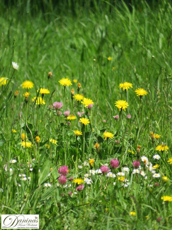 Eine Blumenwiese gehört in den naturnahen Garten