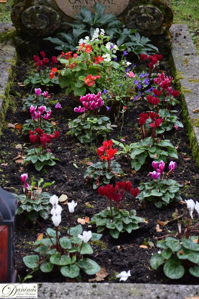Schöne Grabbepflanzung im Herbst mit Stiefmütterchen. Beispiel zum Selbermachen.