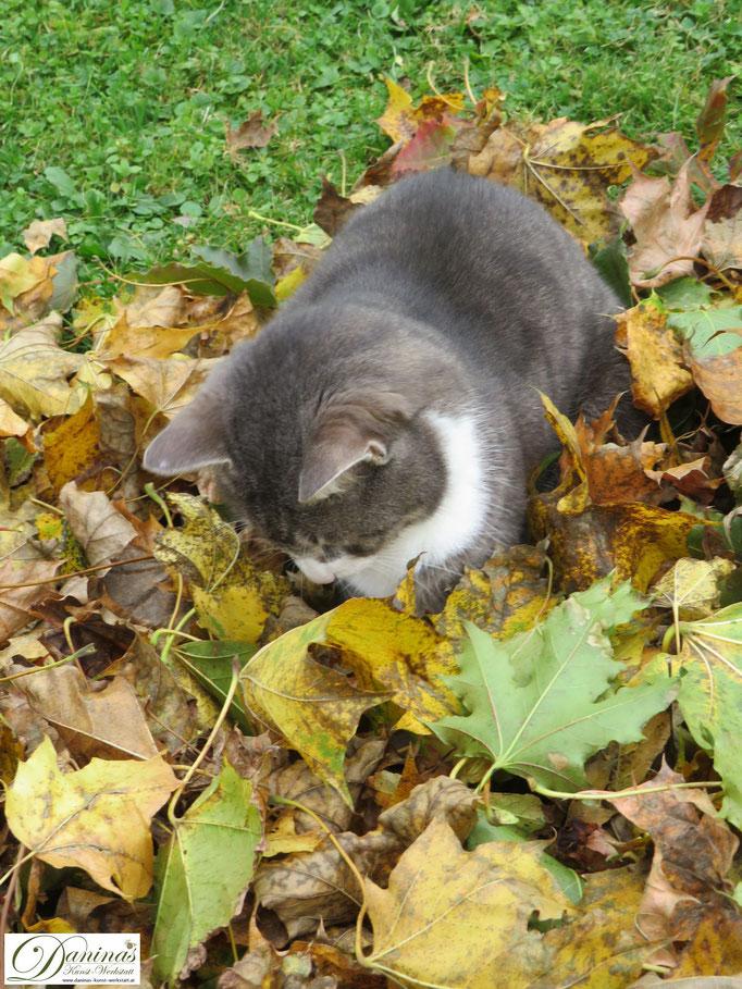 Katze Pauli im Herbstblätter-Rausch. Was bewegt sich da drinnen? Was?