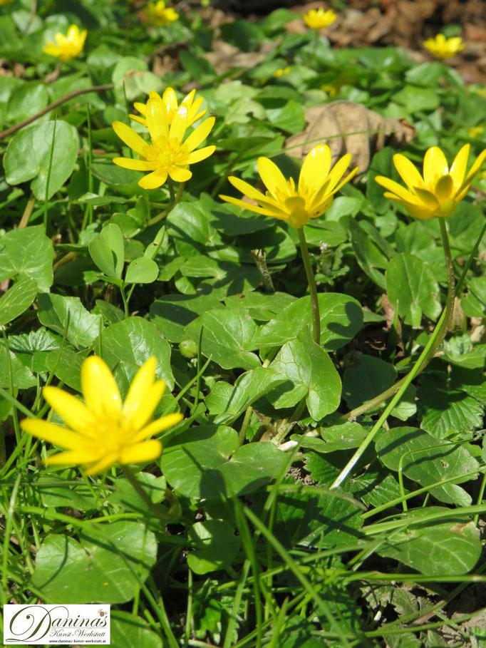 Im Naturgarten dürfen wertvolle Wiesenkräuter und -blumen wachsen