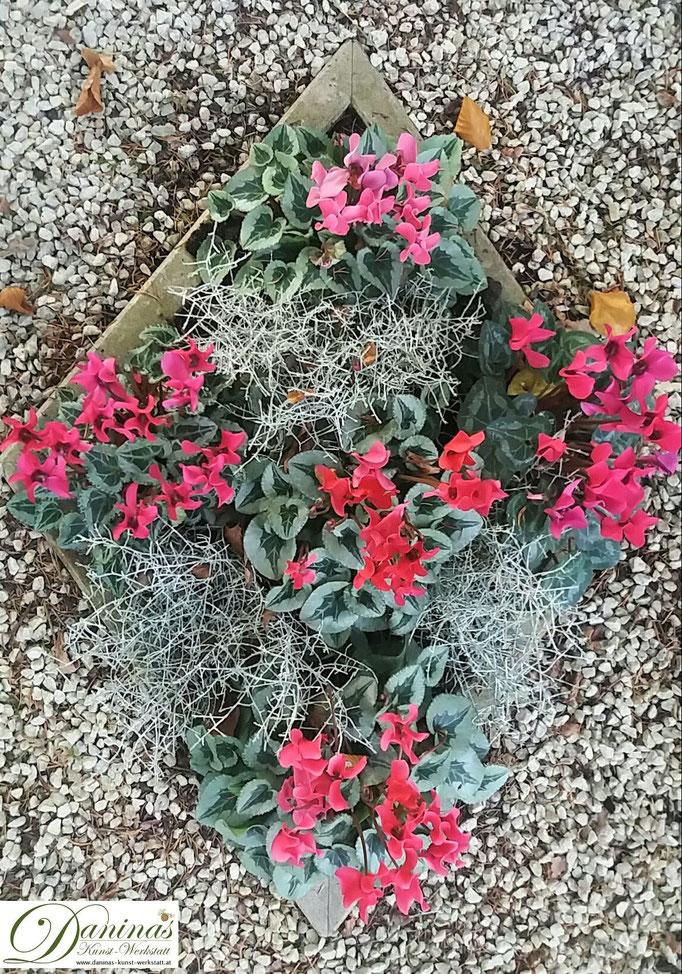 Grabgestaltung im Herbst Beispiel mit Cyclamen.