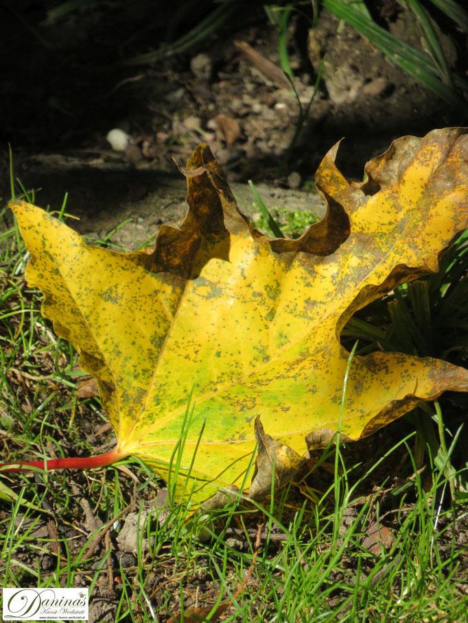 Herbstlich gelb gefärbtes Ahornblatt