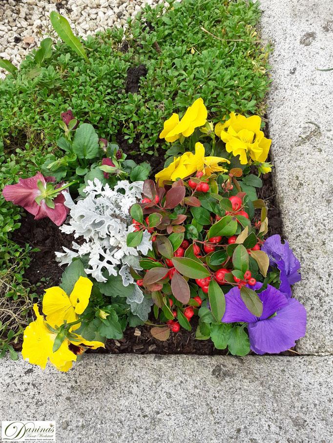 Wunderschöne bunte Blumen für die Grabbepflanzung im Herbst.