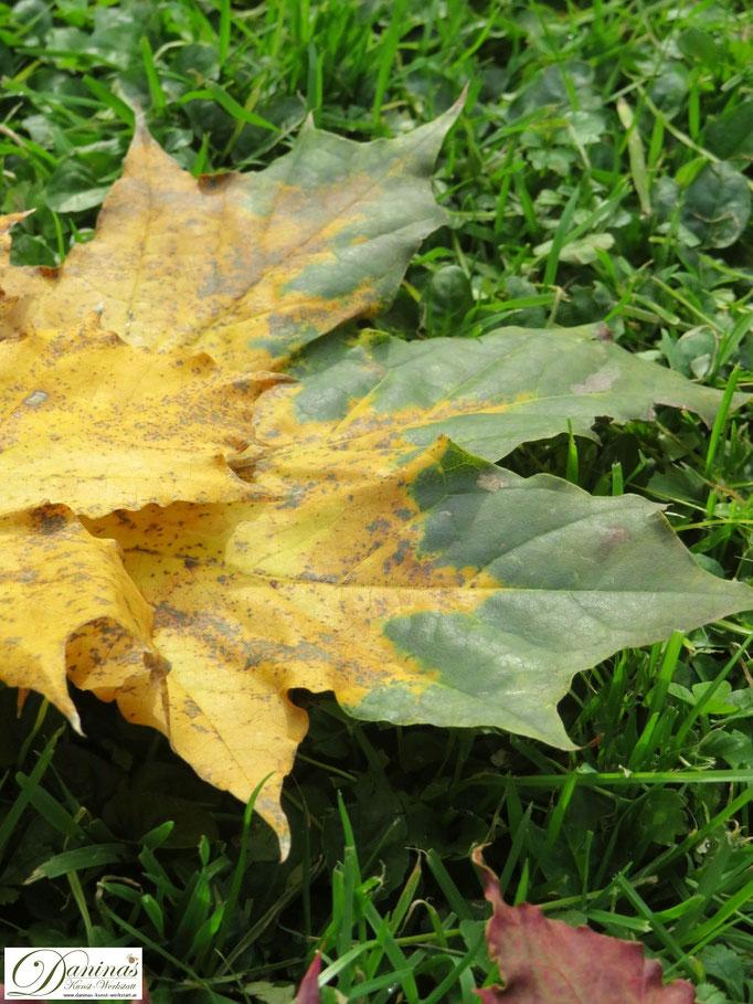 Gelb-grüne Ahornblätter