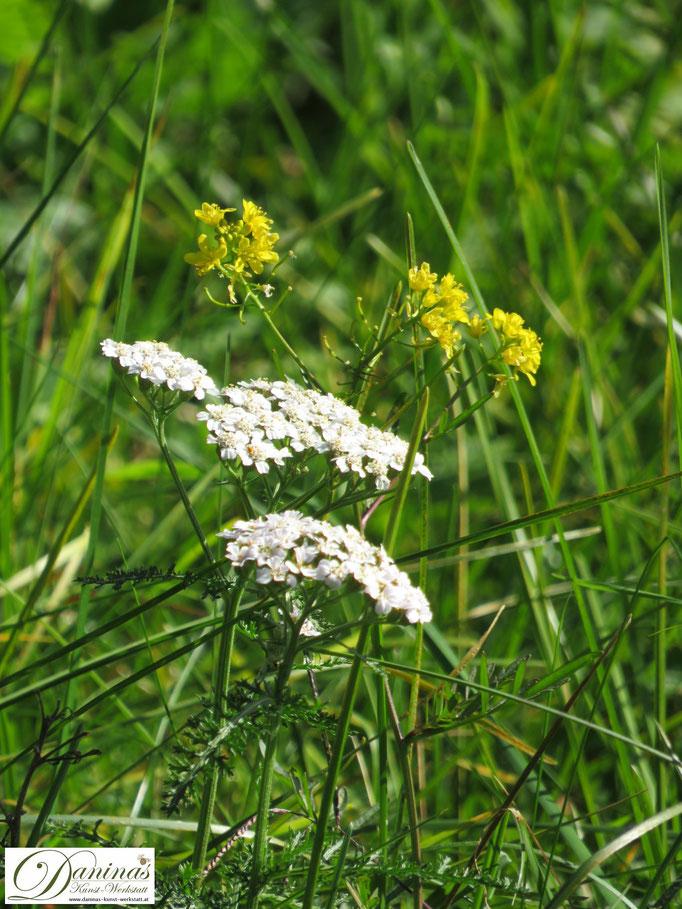 Nektar- und pollenreiche Wildblumen in der Blumenwiese lockt Bienen und Insekten an