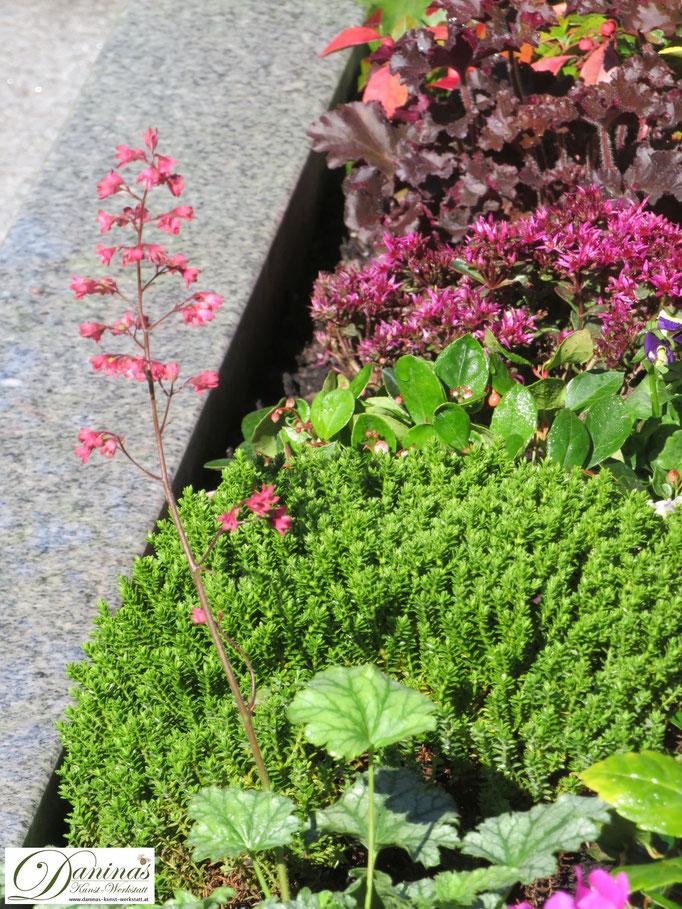 Herbstliche Grabbepflanzung mit rosa blühender Heuchera