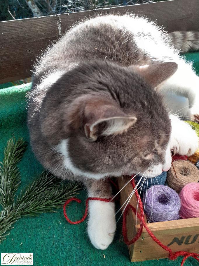 Weihnachtsstern basteln mit Katze als helfender Weihnachtself by Daninas-Kunst-Werkstatt.at