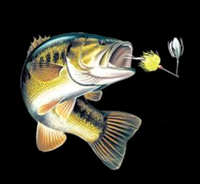 teeshirt black bass