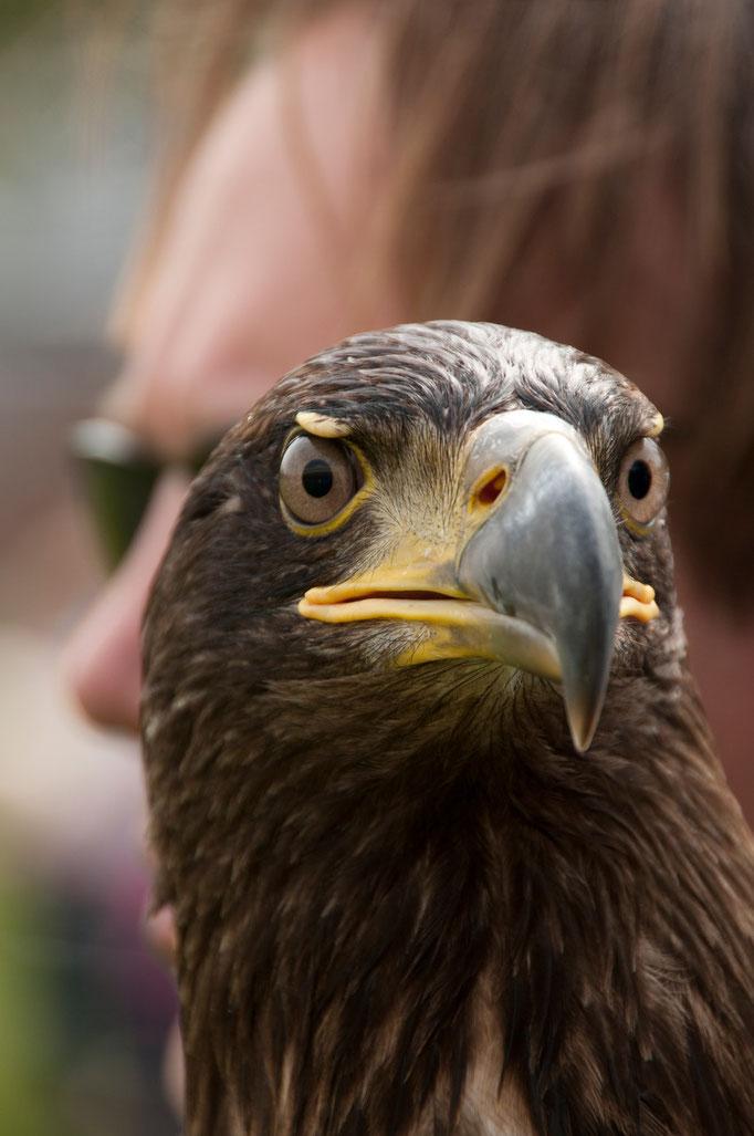 roofvogelshow v. Heekpark