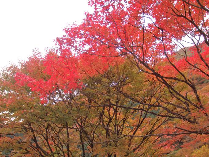 石鎚スカイライン入口の紅葉