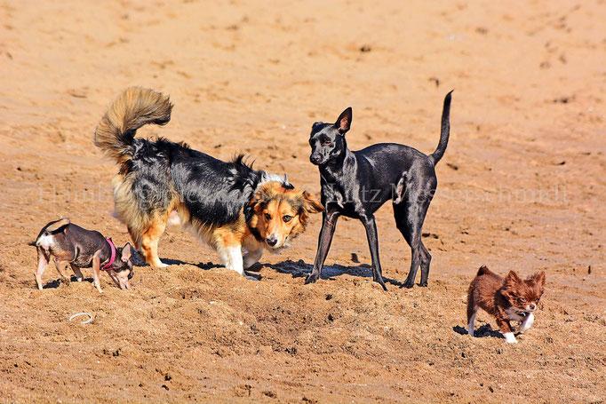 övelgö 14 - Hundefreuden am Elbstrand Övelgönne
