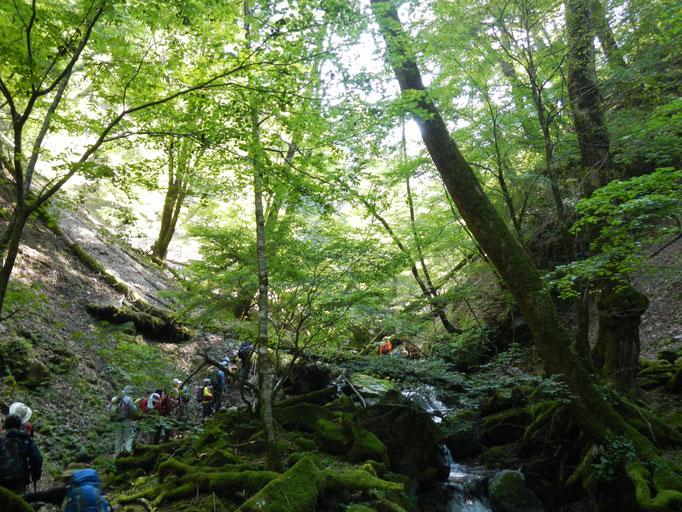原生の森 マタロク谷を遡行