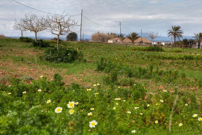landwirtschaftliches Anwesen
