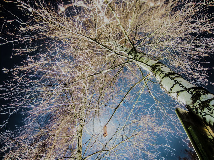 illuminierte Birke - 2013 - visual Heinrich Ortner