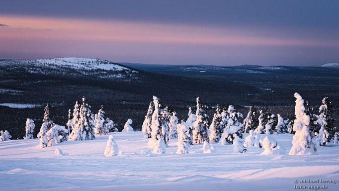 Verschneite Bäume, Nordfinnland