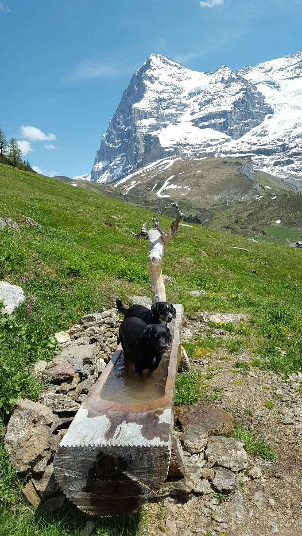 Finn und Jana nehmen ein Bad im Brunnen