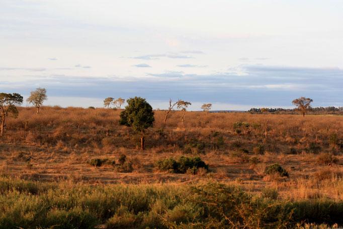 uitzicht op Kruger park vanaf Bucklers Afrika